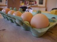 Lace Orpington Eggs