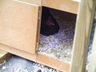 Marina on the nest